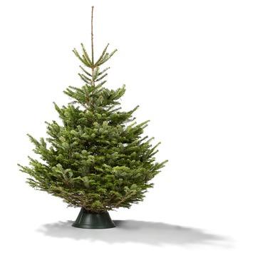 Kerstboom Nordmann Gezaagd Hoogte 200 250 Cm Gamma Be