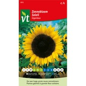 VT zonnebloem hoog giganteus 2 gram