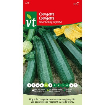 VT courgette black beauty superba 2 gram