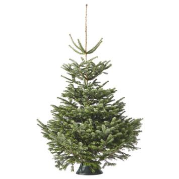 Kerstboom Nordmann 125-150 cm