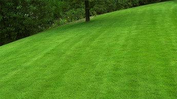 Gras en gazon onderhouden for Quand semer son gazon