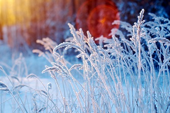 Winterklaar Maken Tuin : Tuin winterklaar maken gamma be