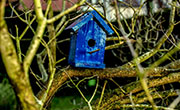 Maak een klassiek vogelhuisje