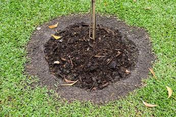 compost-najaar23.jpg