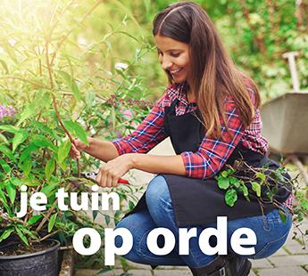 tuin-op-orde.jpg