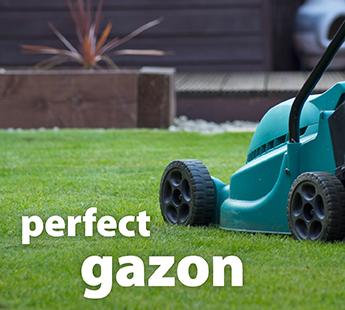 gazon.jpg