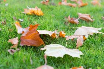herfstbladeren-oprumen23.jpg