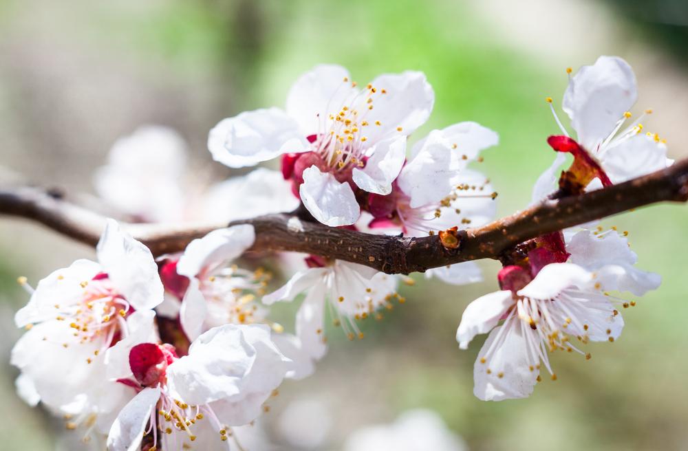 Bloesem - De tuin in het voorjaar - Hoofdbeeld.jpg